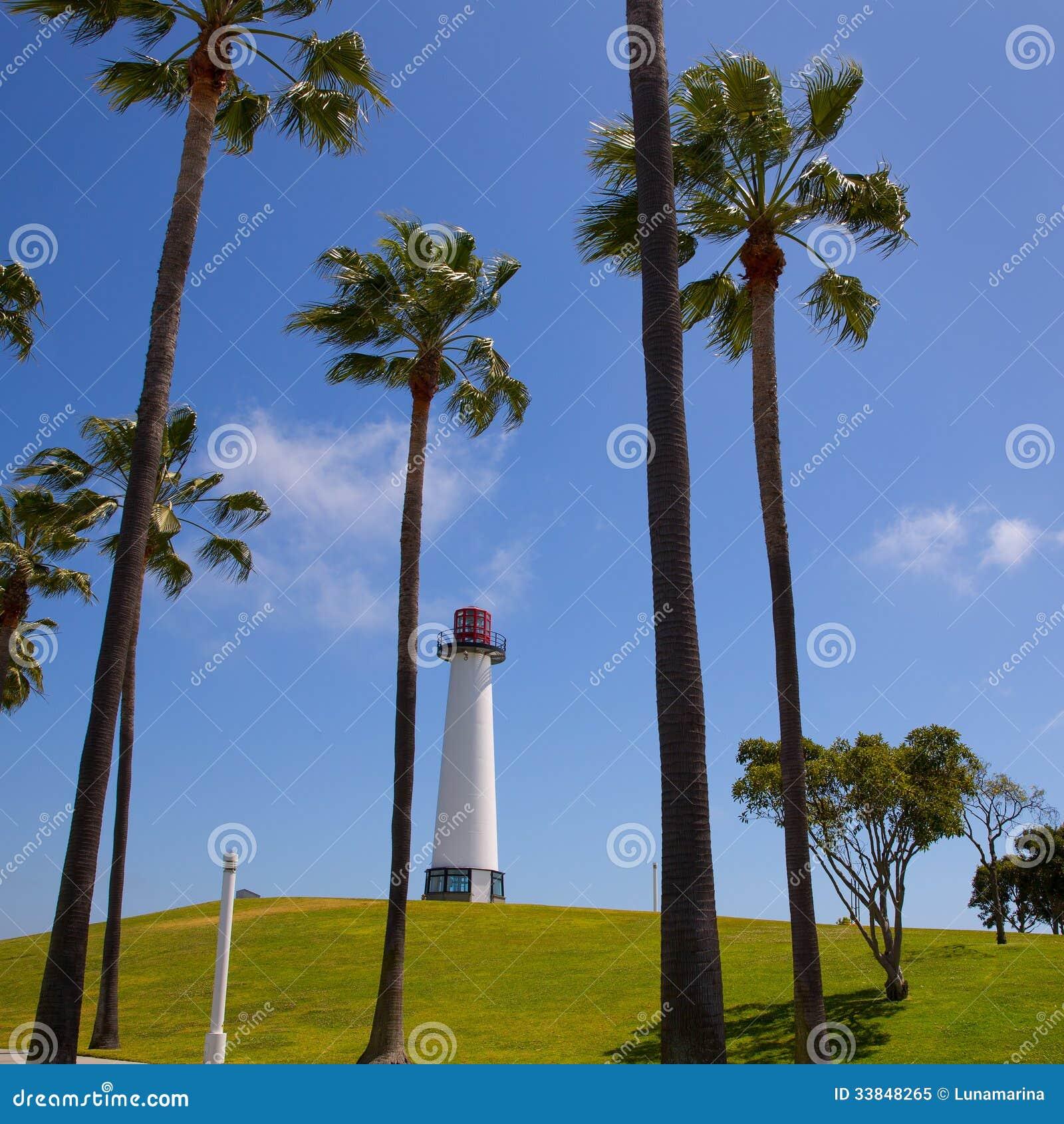 Long Beach California Pigeon
