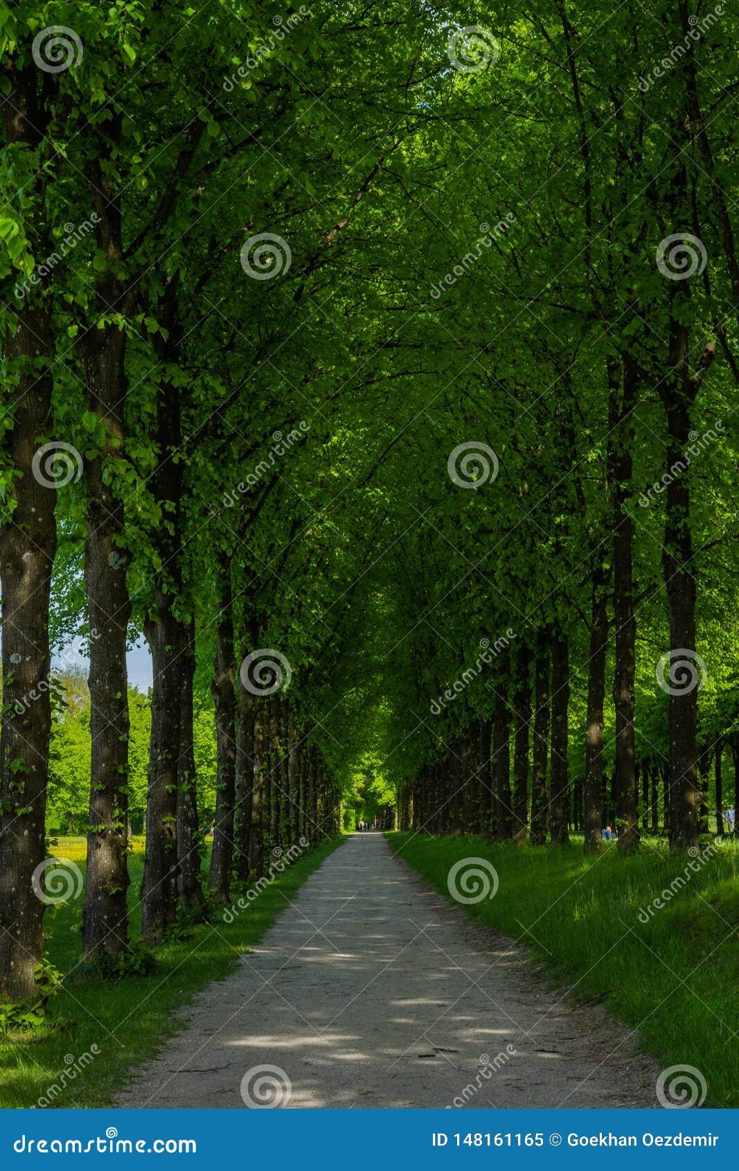 Long chemin mystique dans la forêt