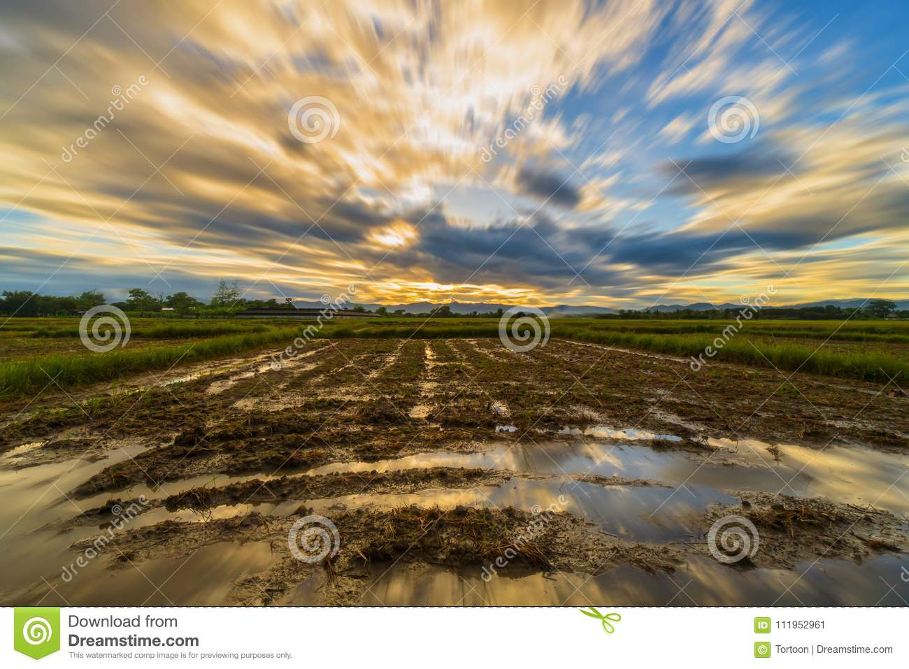 Long Exposure Landscape With Clouds Moving Rice Field And Sunset Stock Image Image Of Grass Agriculture 111952961