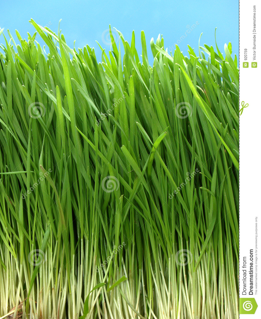 Long grass royalty free stock images image 920759 for Like long grasses