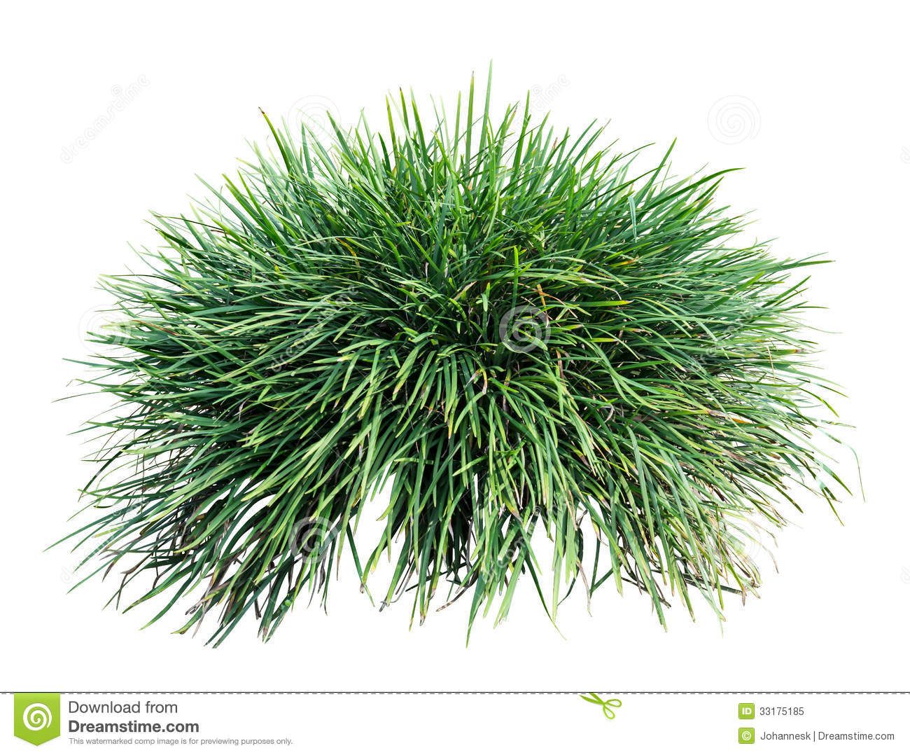 Long grass royalty free stock photo image 33175185 for Long ornamental grass