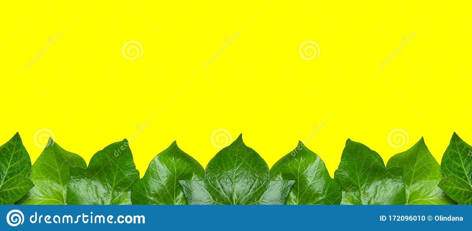 Long High Resolution Banner With Bottom Border From Fresh Green House Plants Ivy On Yellow Background Template For Spring Stock Photo Image Of Frame Spring 172096010