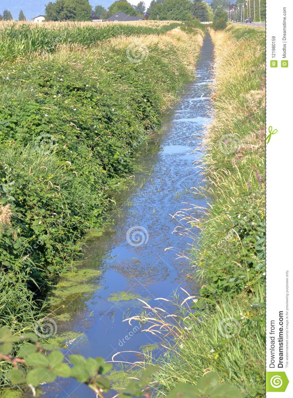 Long Narrow Irrigation Ditch For Farm Crops Stock Image