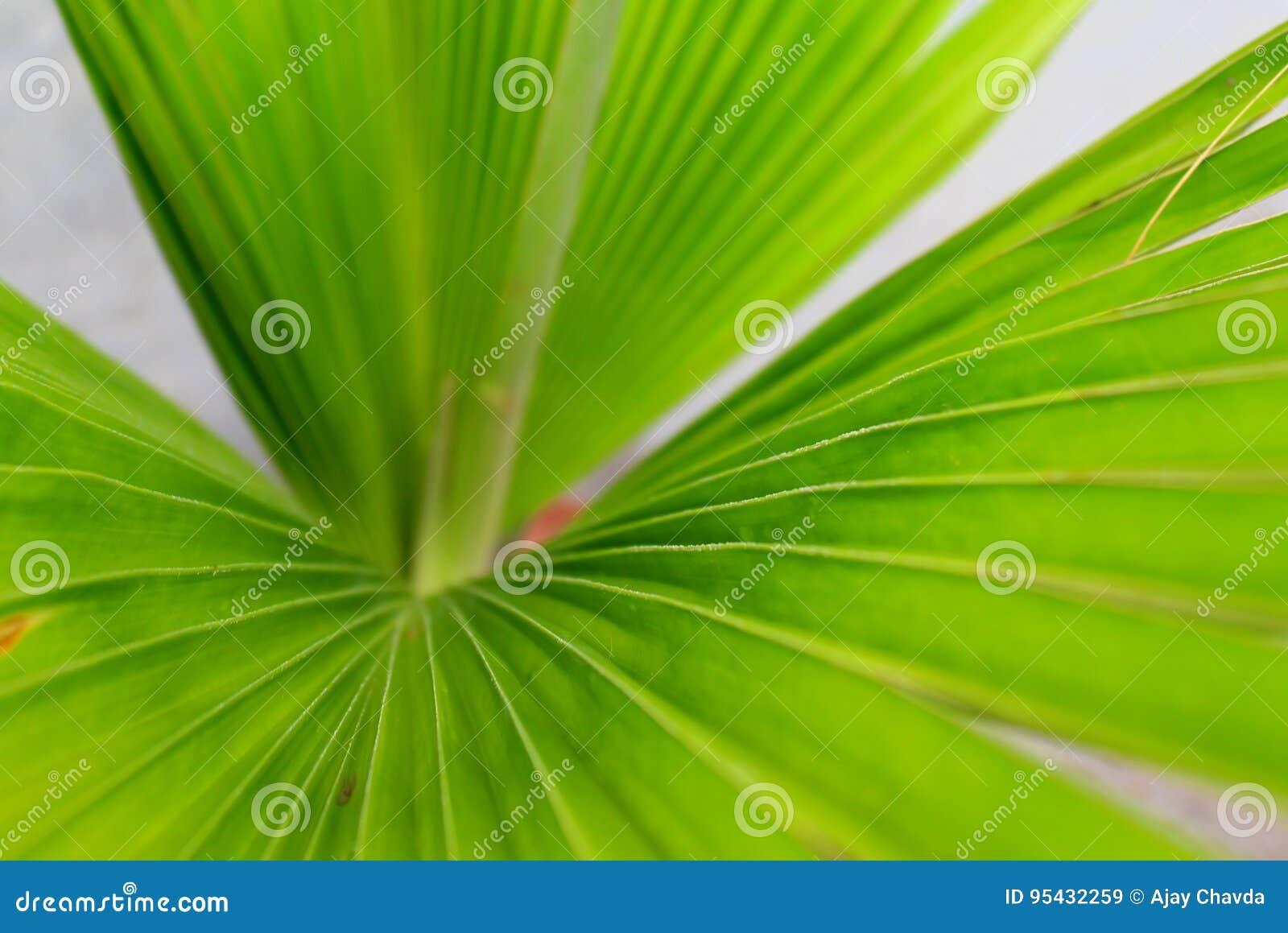 Long Papier Peint Vert D Usine De Feuilles Image Stock Image Du