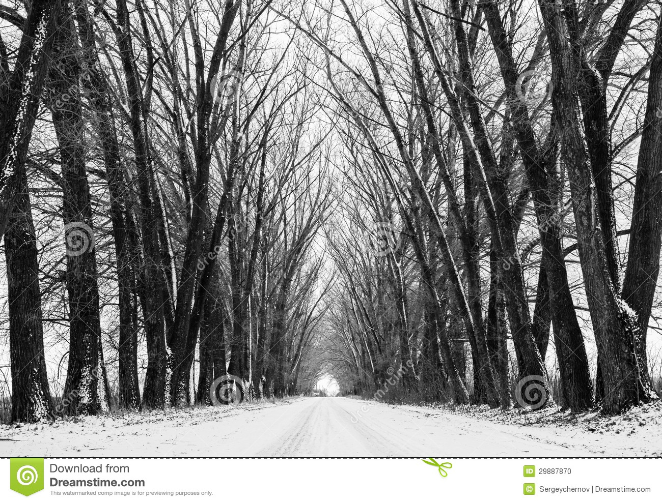 Long perspective road winter scenic background. Big old frozen trees ...