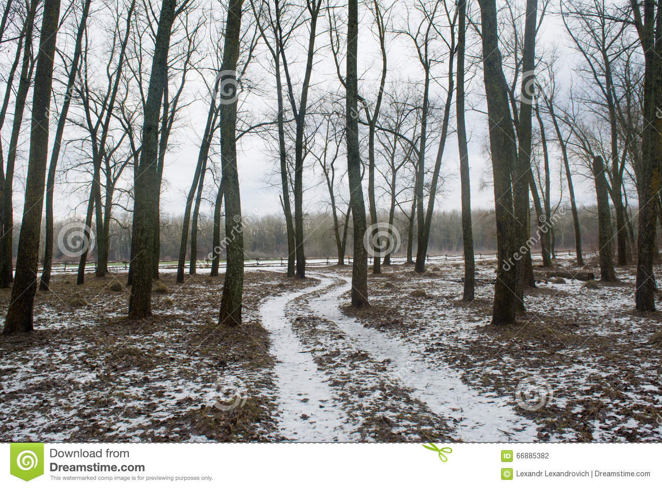 Long road between trees in the winter dark forest during february