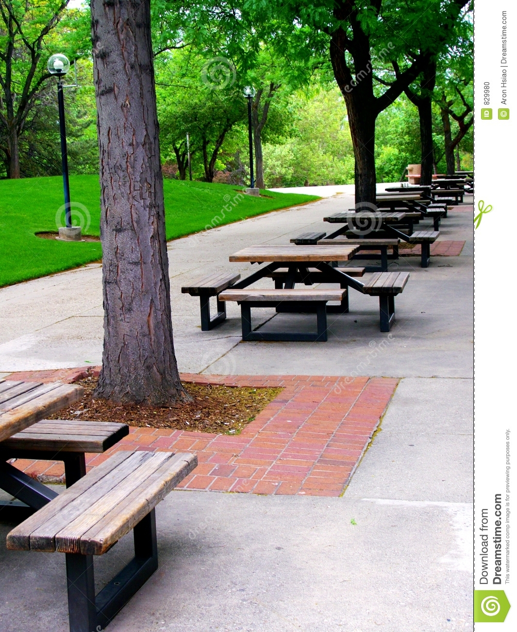 Long rows of outdoor picnic or lunch tables