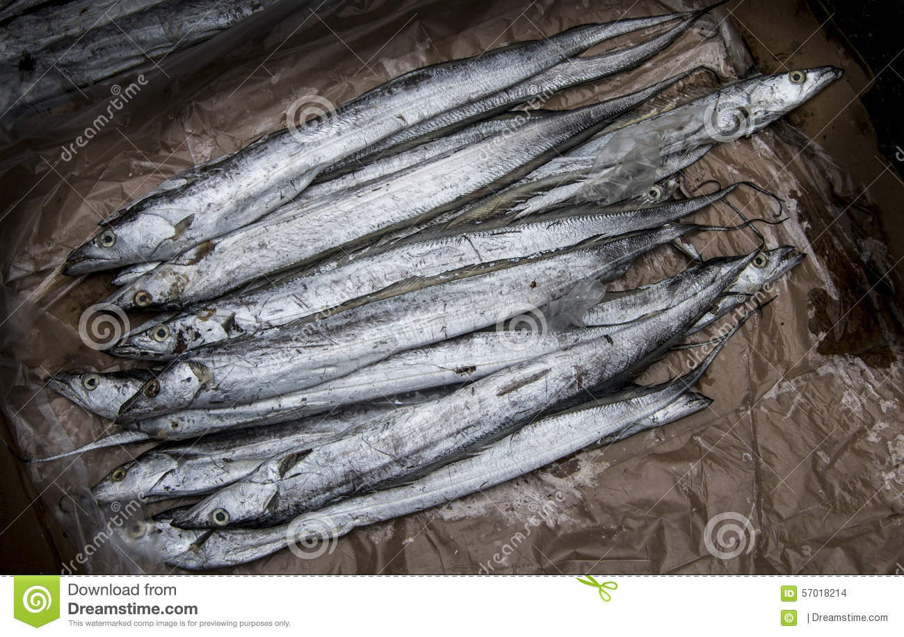 Long silver fish stock photo image 57018214 for How long is fish good for