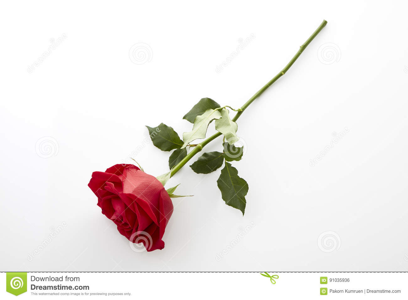 Beautiful Single Red Rose Flower Isolated Royalty Free: Long Stem Red Rose Stock Photo. Image Of Long, Frehness
