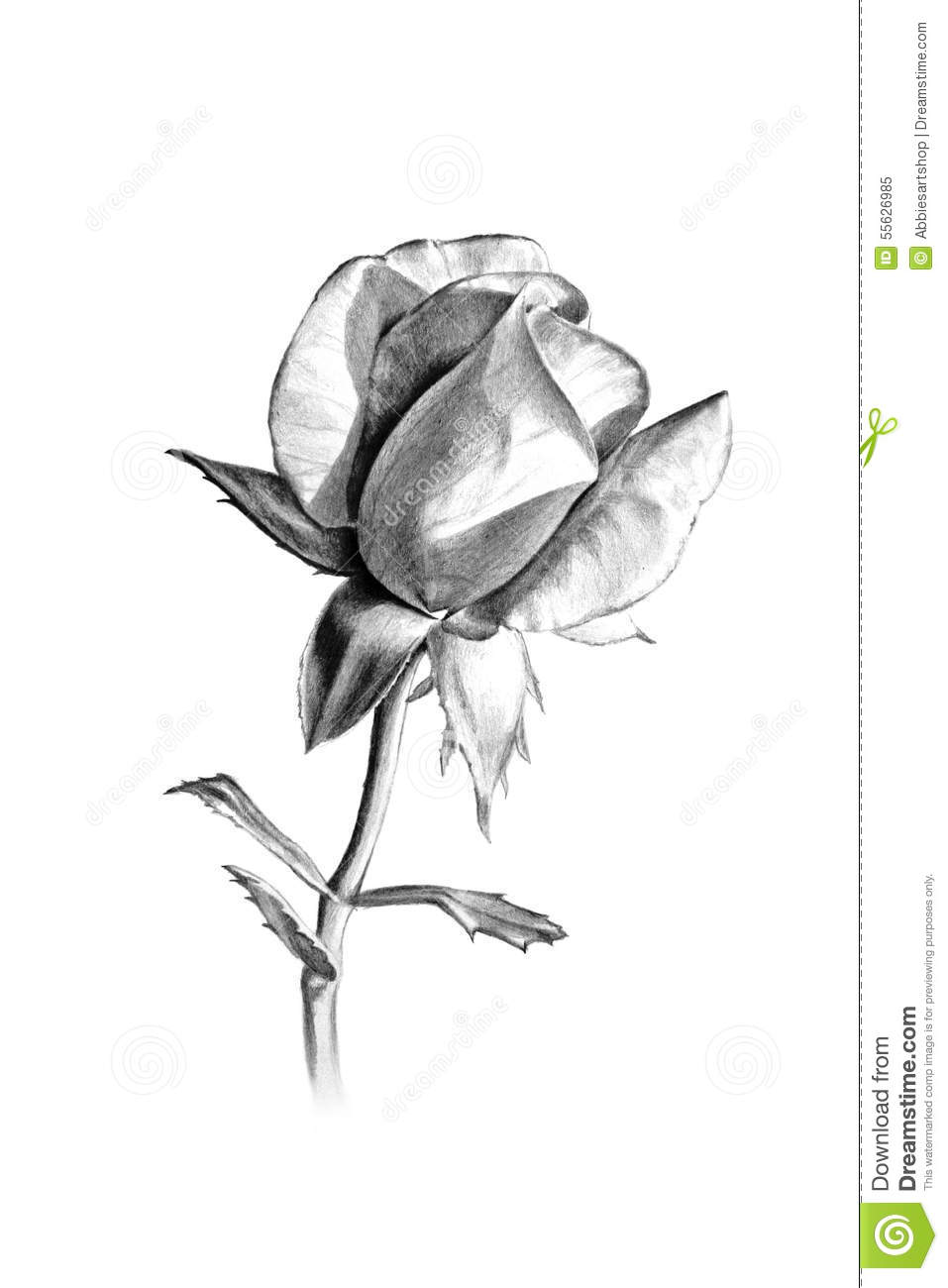 Long stem rose pencil sketch for valentines day or more