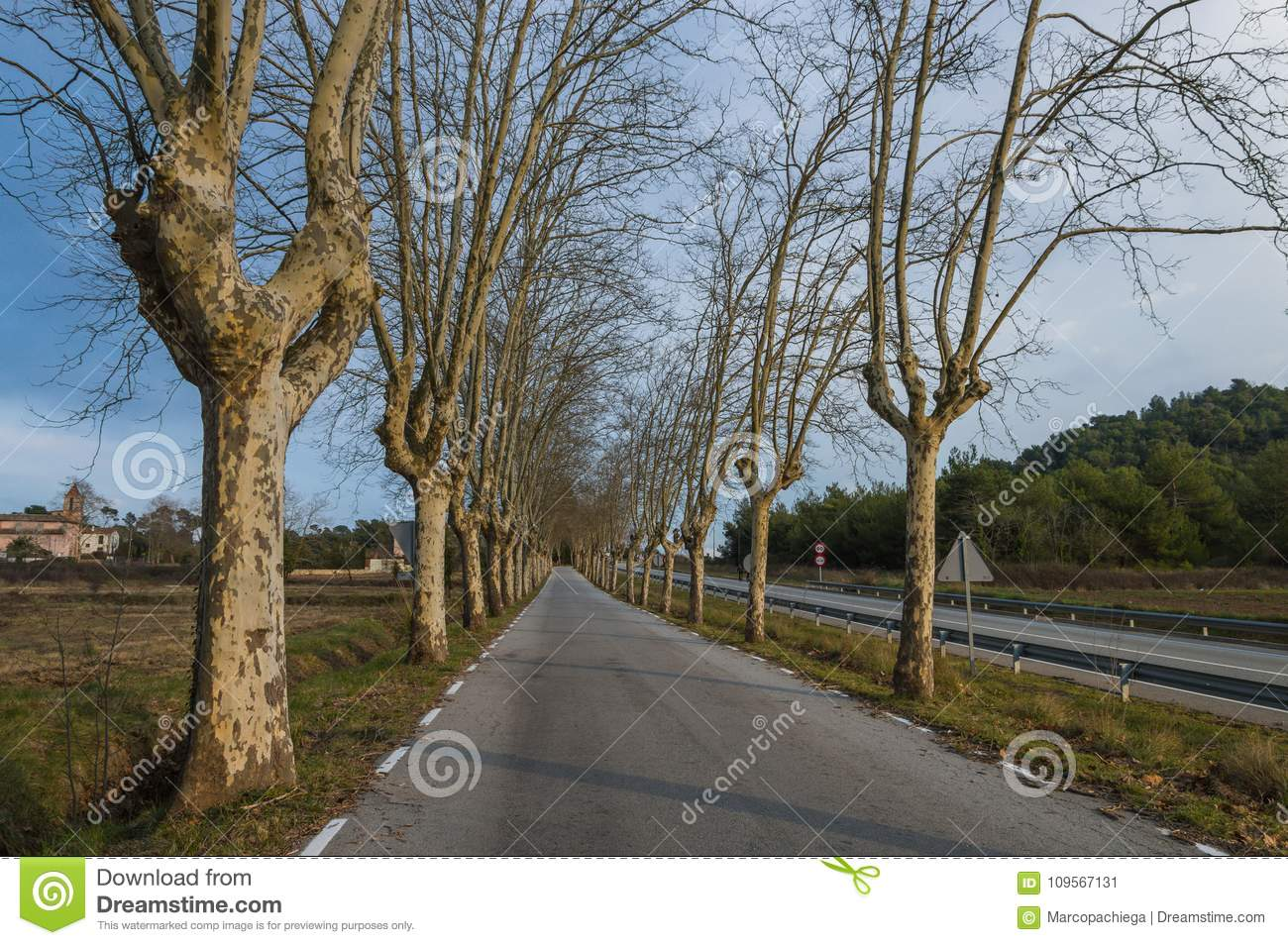 Straight Road Trees Stock Photos - Download 2,799 Images for Straight Road With Trees  111ane