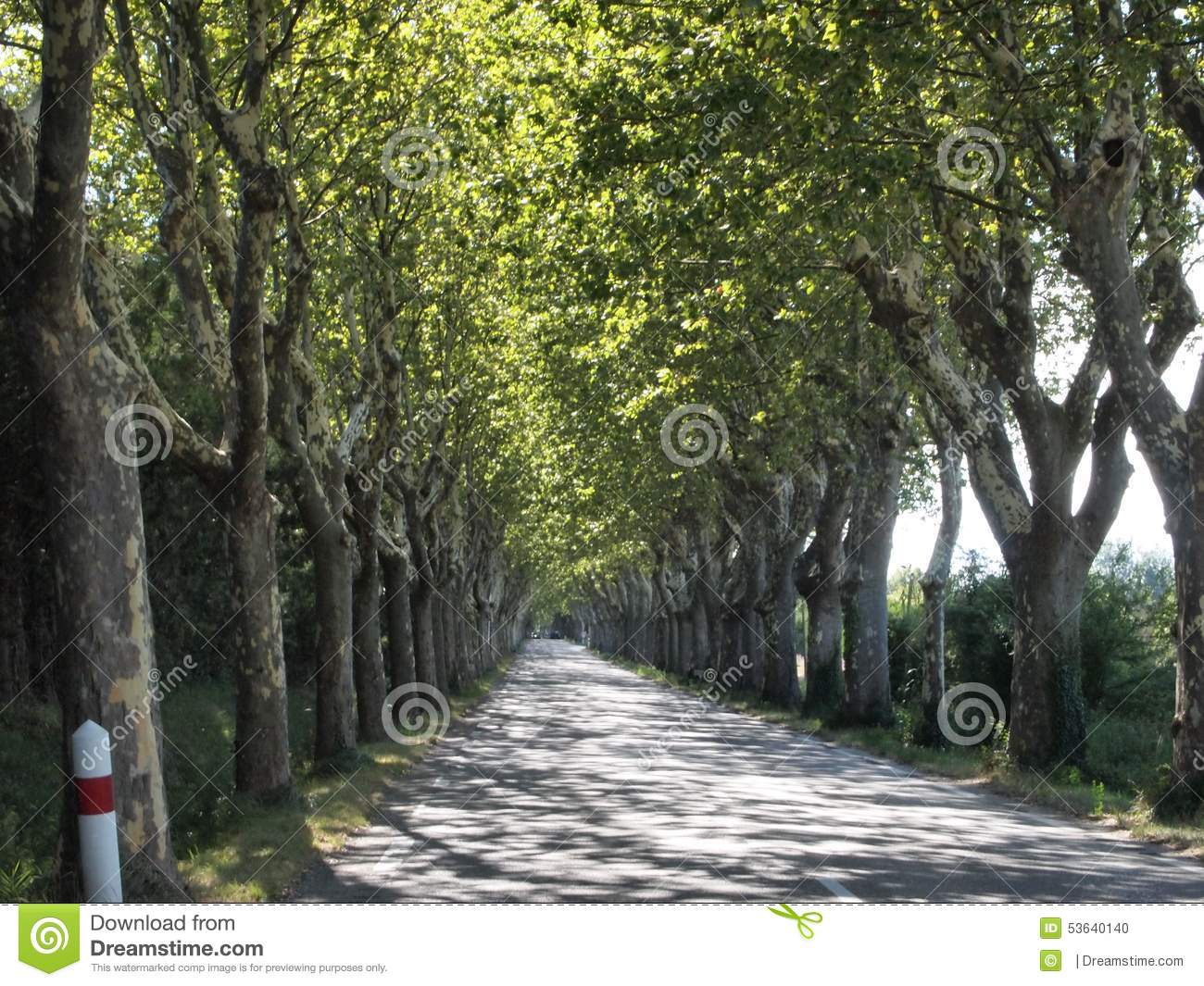 Long straight road under a canopy of trees stock photo for Canopy of trees