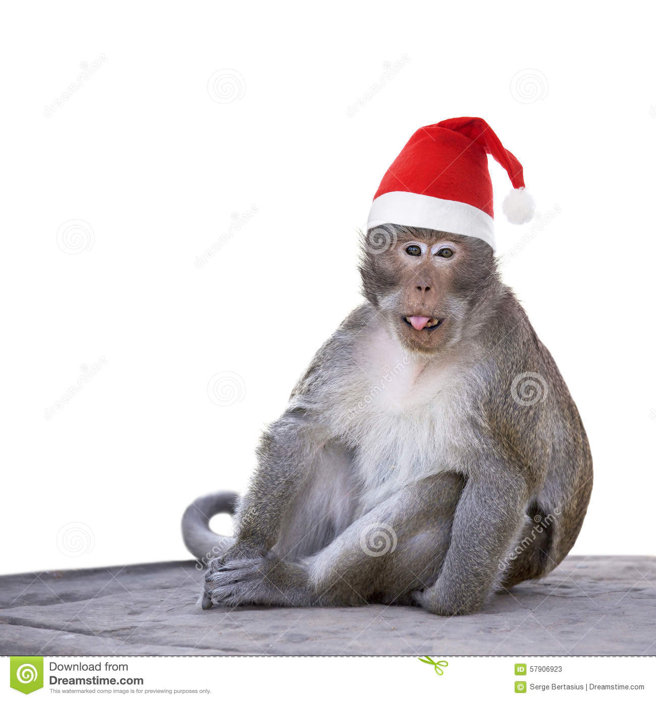 Long-tailed Macaque Monkey With Christmas Santa Hat Isolated On ...