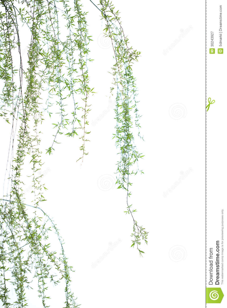 prolonged Willow