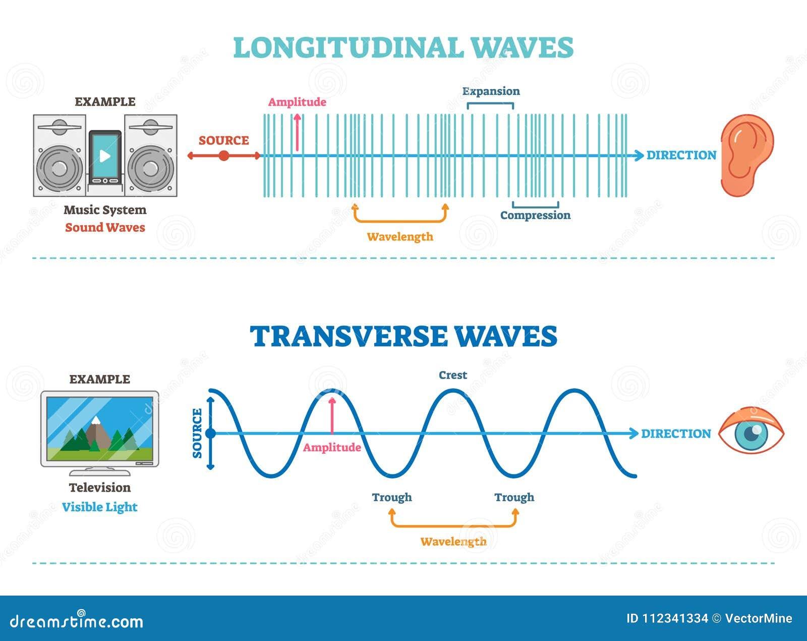longitudinal transverse wave type vector illustration scientific diagram sonic visual perception principle structure 112341334 longitudinal and transverse wave type, vector illustration
