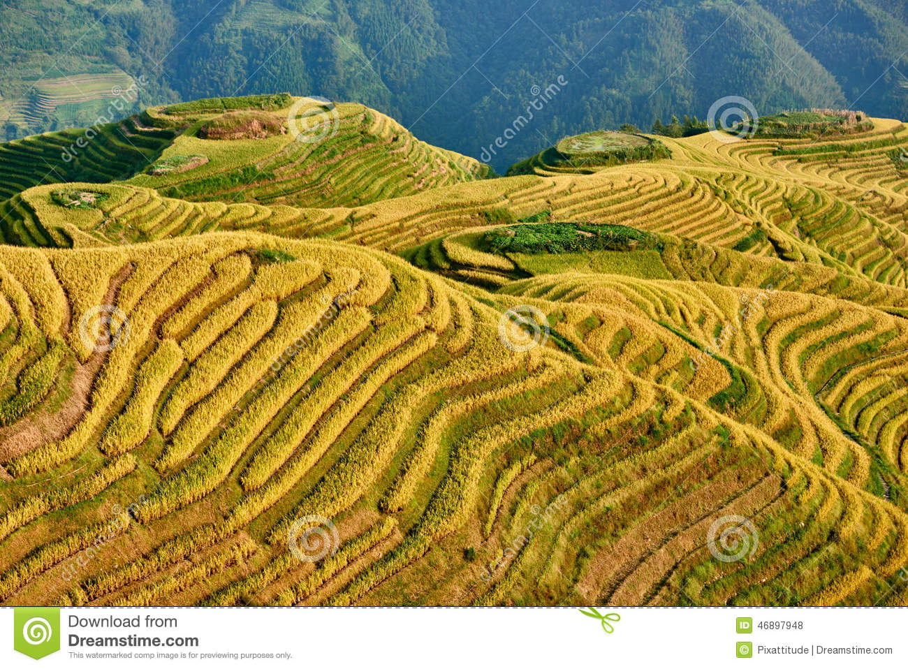 Longji terraced Longsheng Hunan China de Wengjia dos campos do arroz