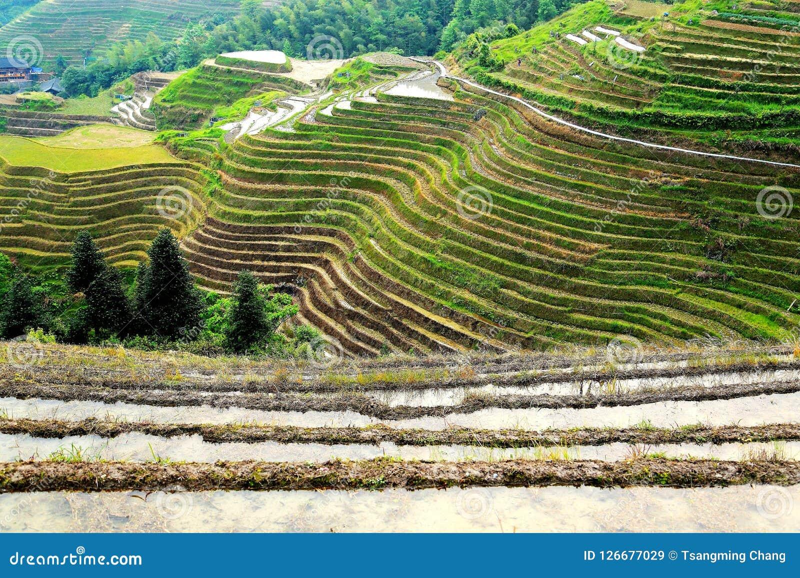 Longji terrassrisfält
