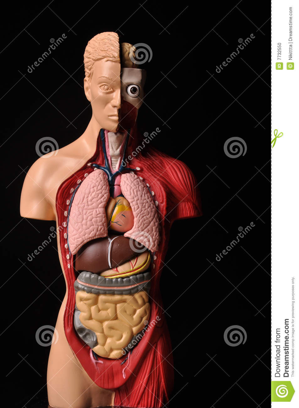 Look Inside Body Human Anatomy Stock Photo Image Of Care Human