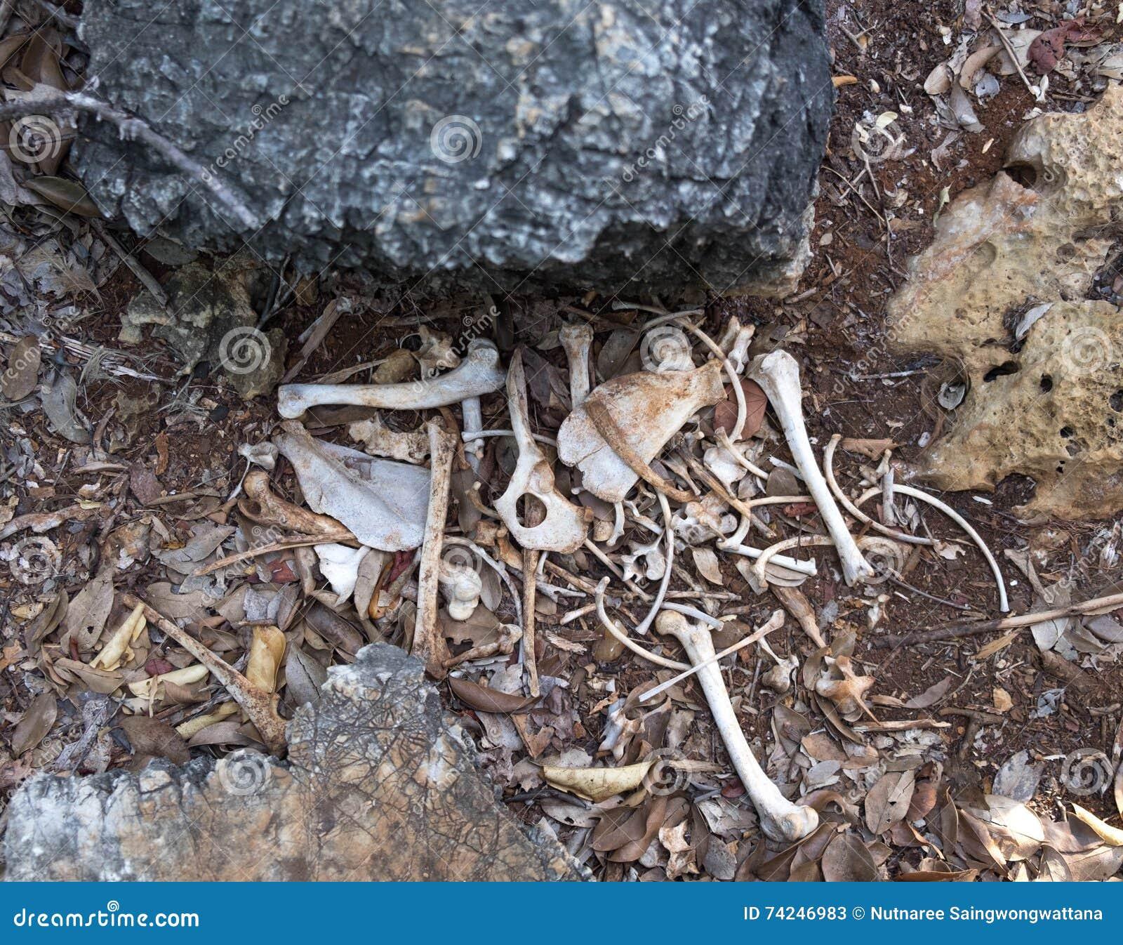 It Look Like Dog Bone Putting In Deep Forest Beside Rock Stock Image ...
