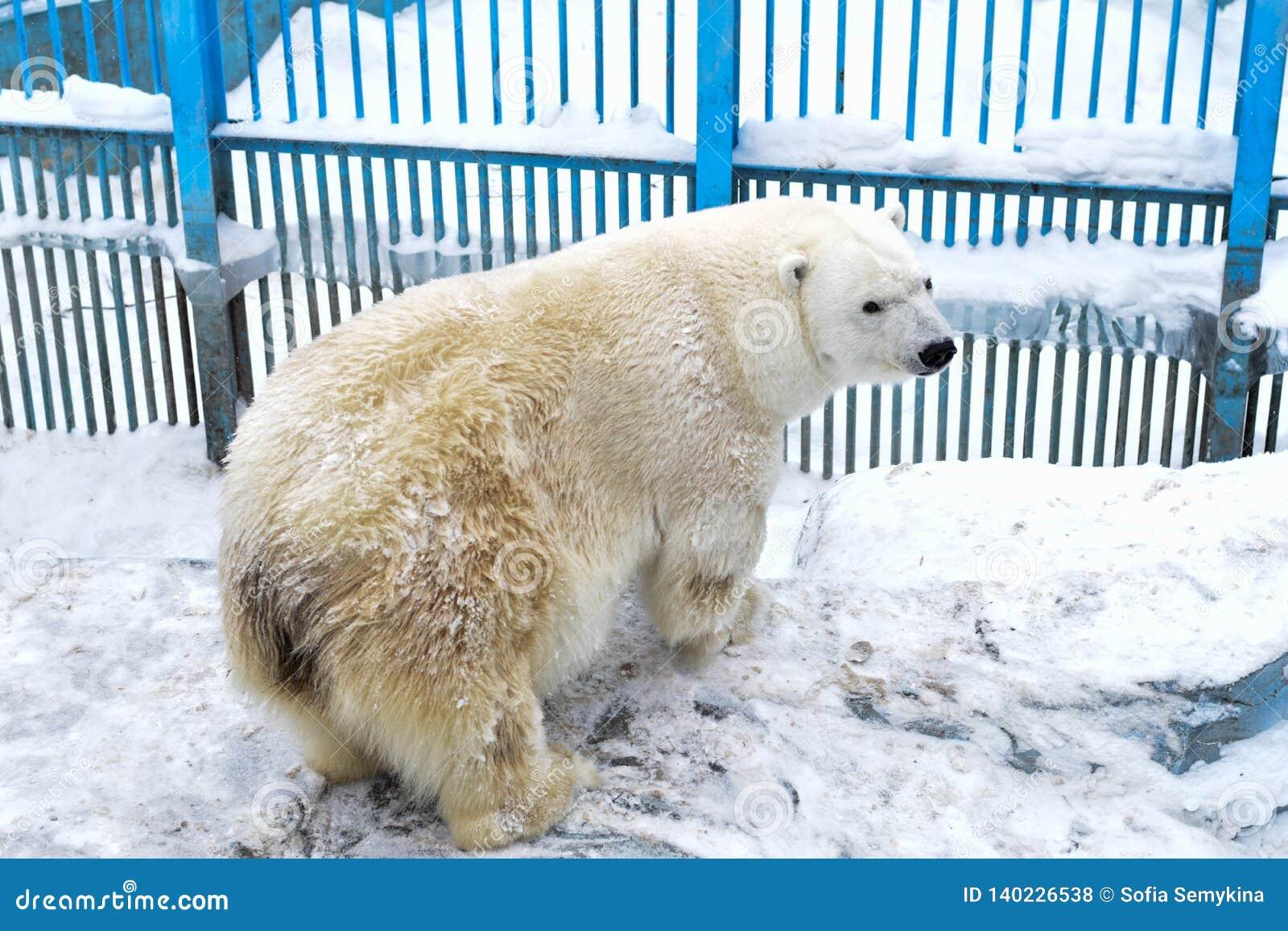 Look polare