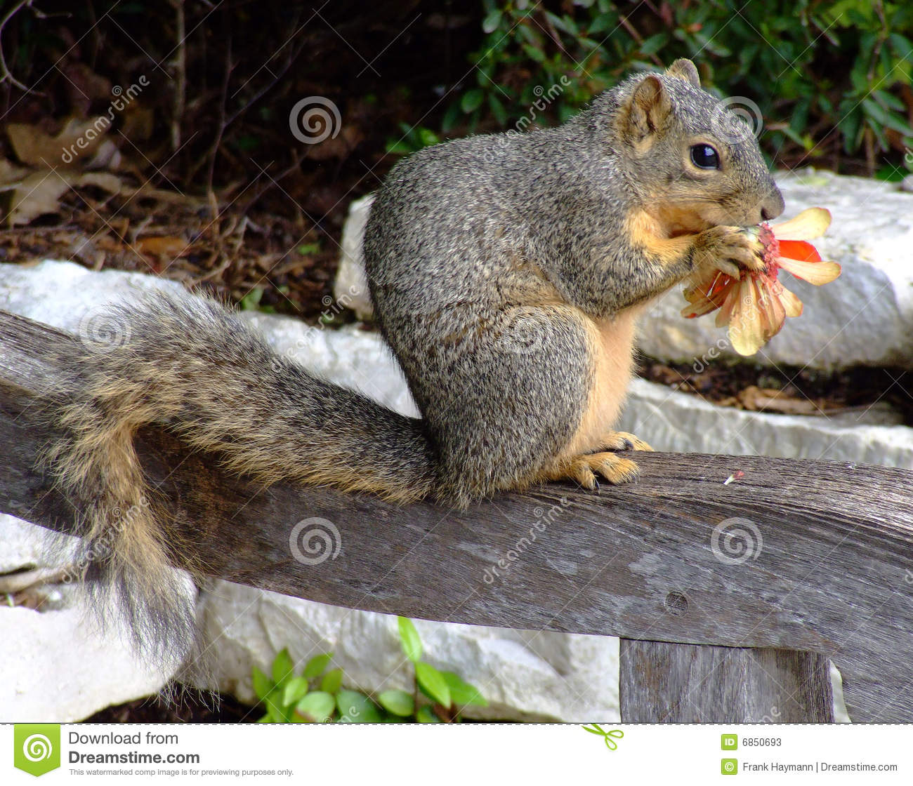 Look At Who Is Eating The Flowers Stock s Image