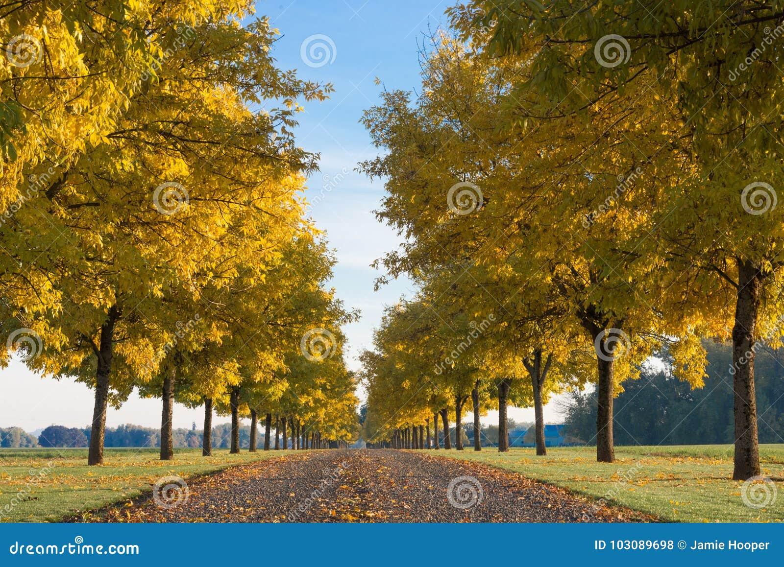 Autumn Sentinals