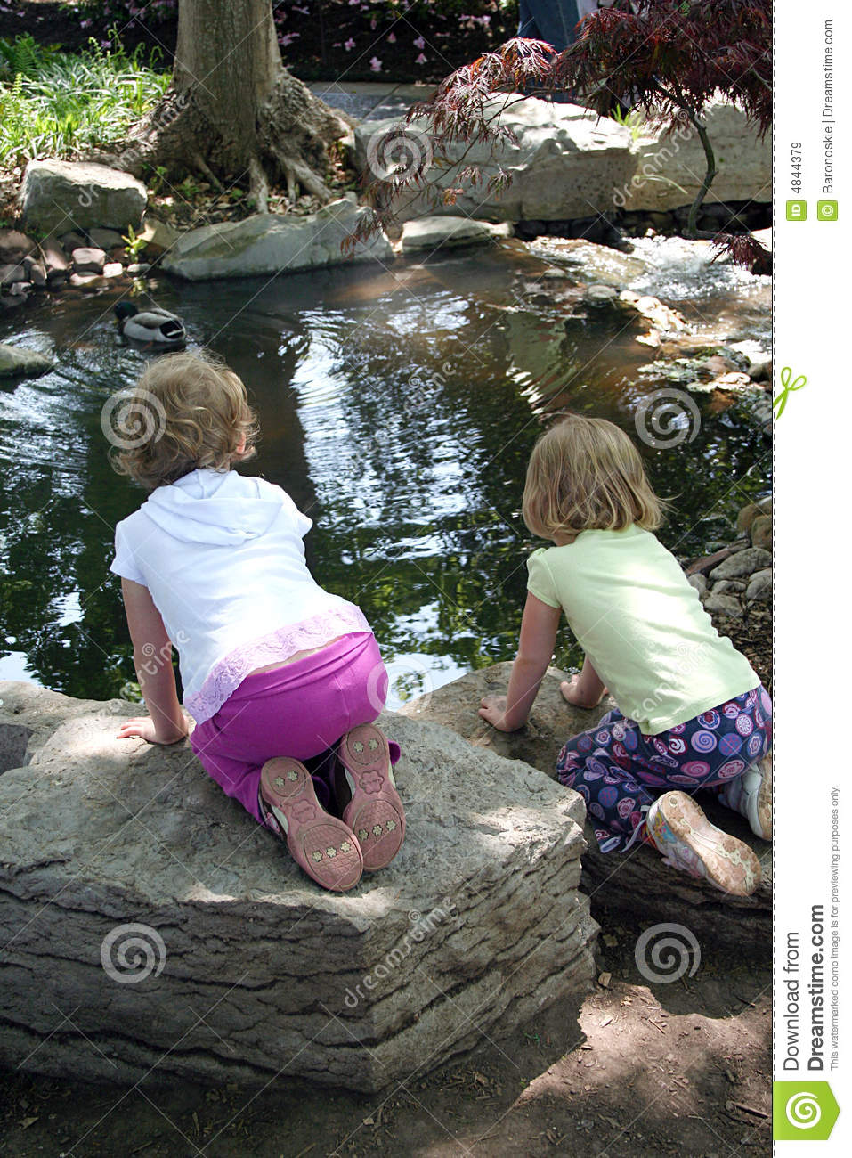 looking in the pond royalty free stock images