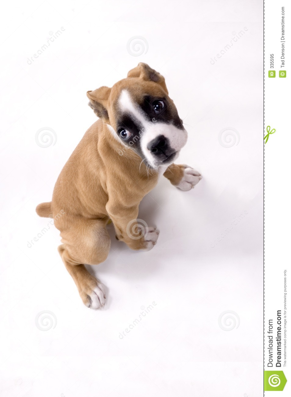 looking sad stock image image of playful best fetch 335595