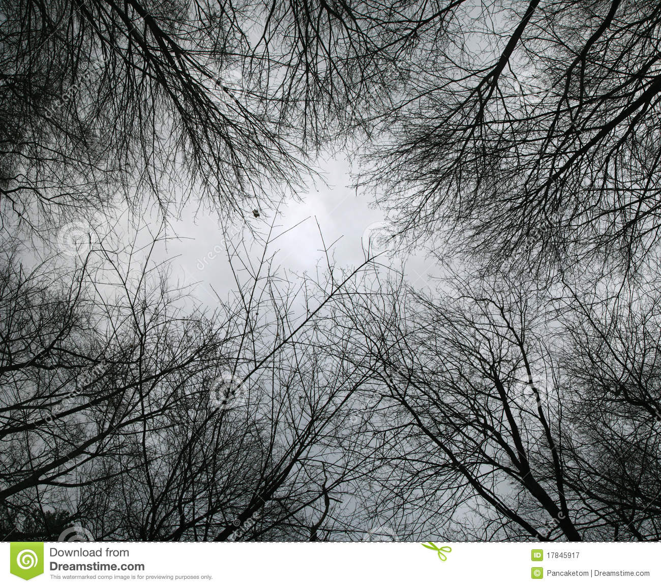 Tree branches in the sky stock photo. Image of open