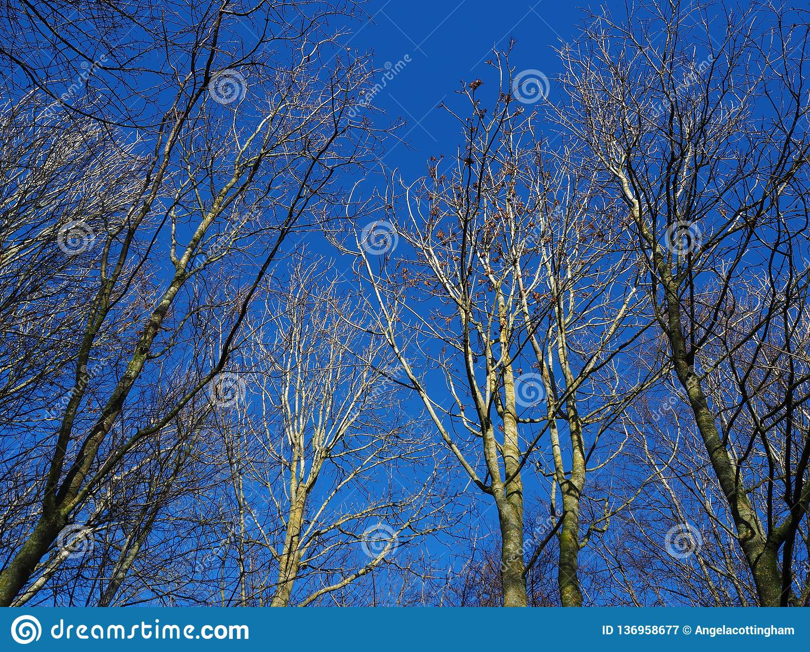 Looking up to grey sky stock image. Image of grey, dull