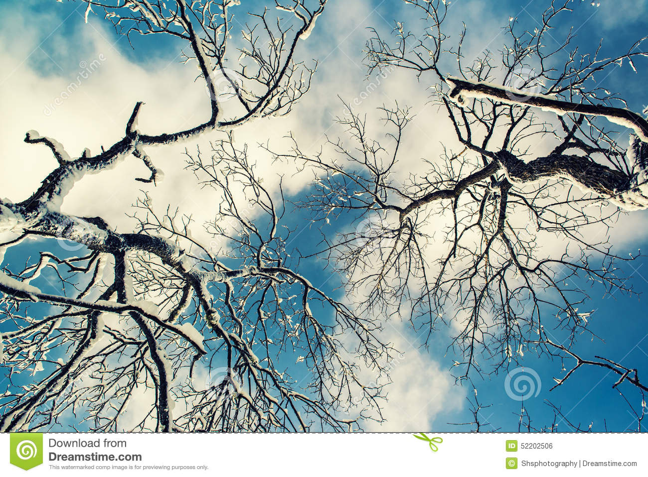 Looking Up To Gray Sky Through Tree Branches Stock Photo