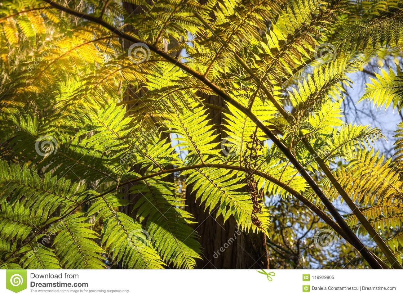Download Looking Up To A Beautiful Sunglowing Fern In A Tropical Forest Stock Image - Image of fern, foliage: 119929805
