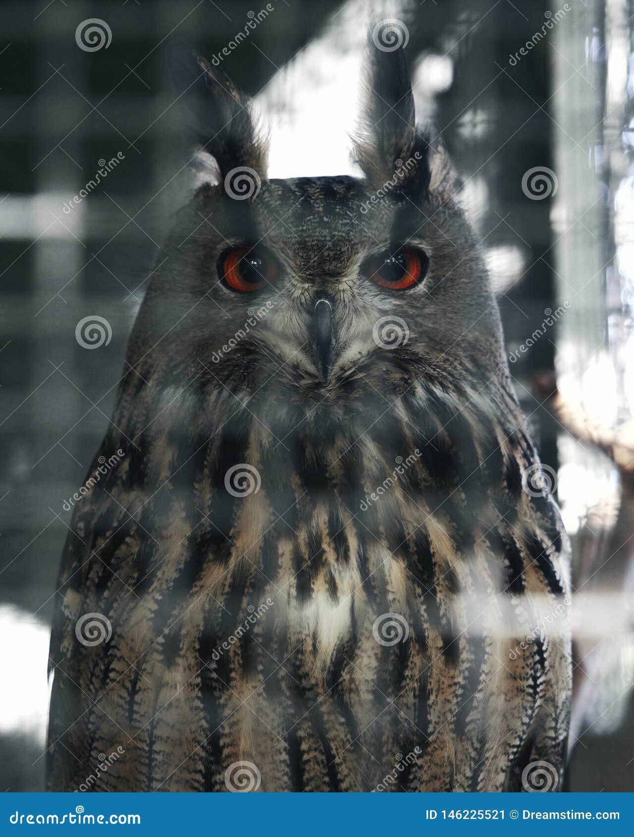 Looks wise owl. Beautiful bird