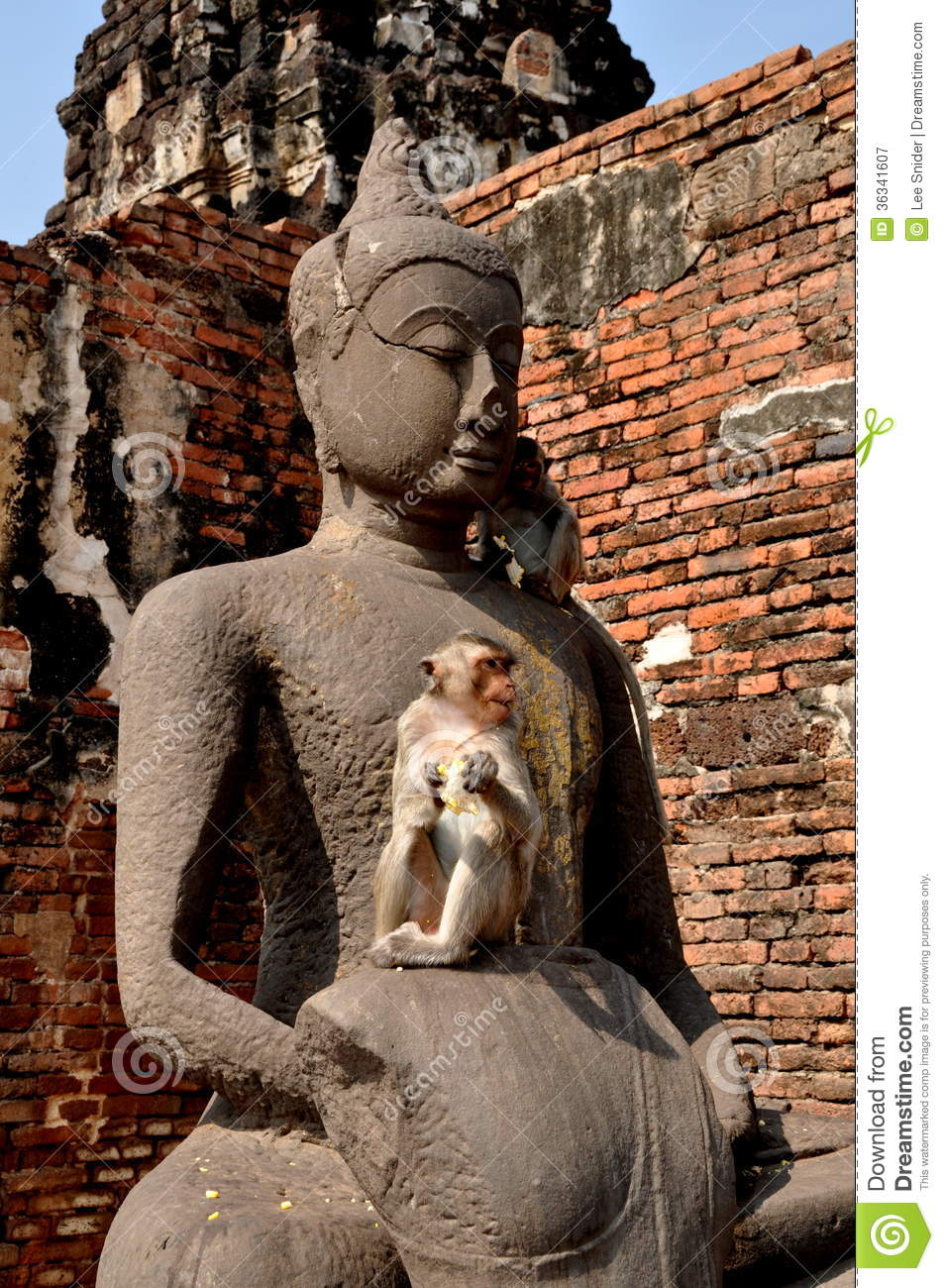 monkey eating a piece of corn-on-the cob sitting on a Buddha statue ...