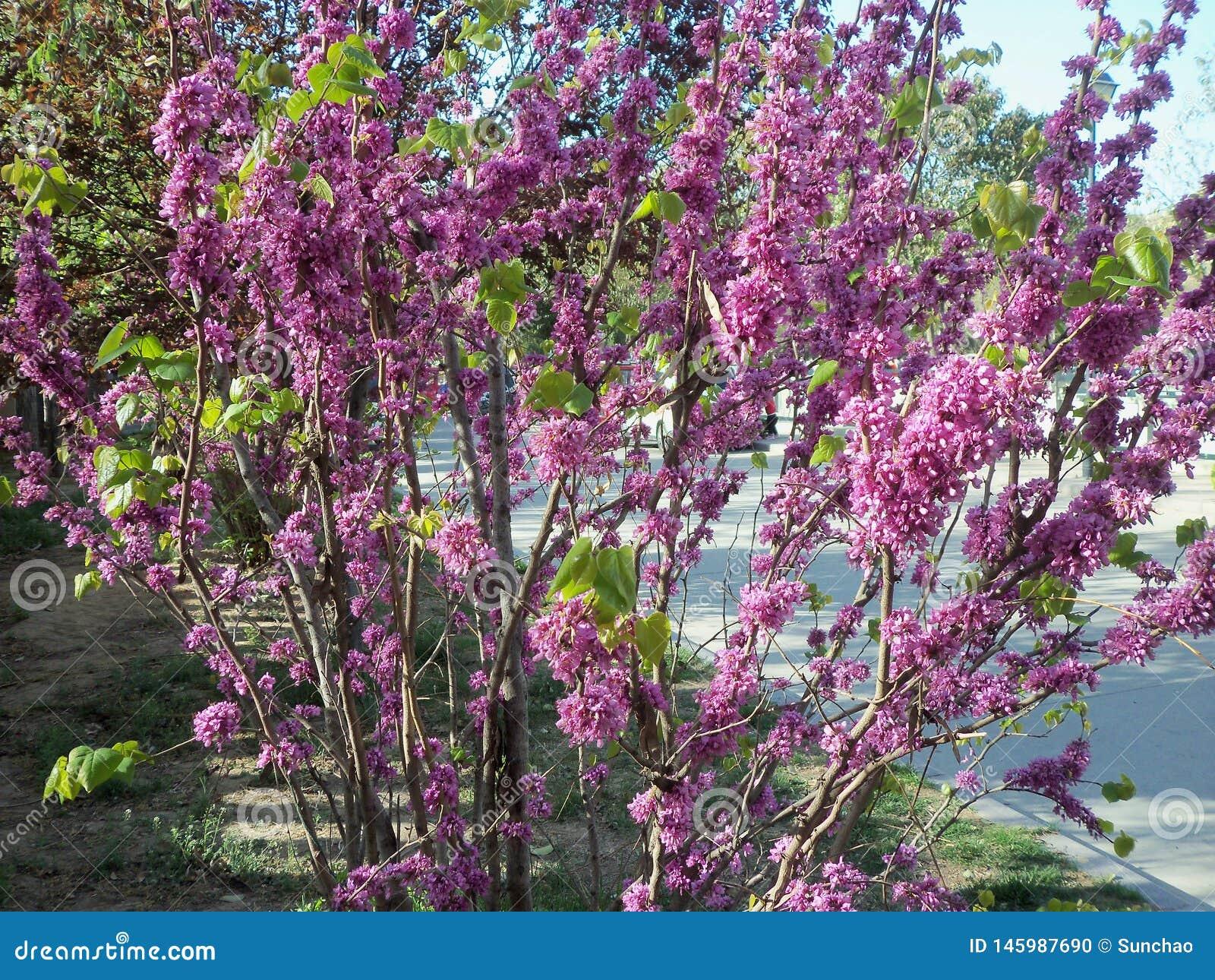 Lopp i Kina, blomma och bi