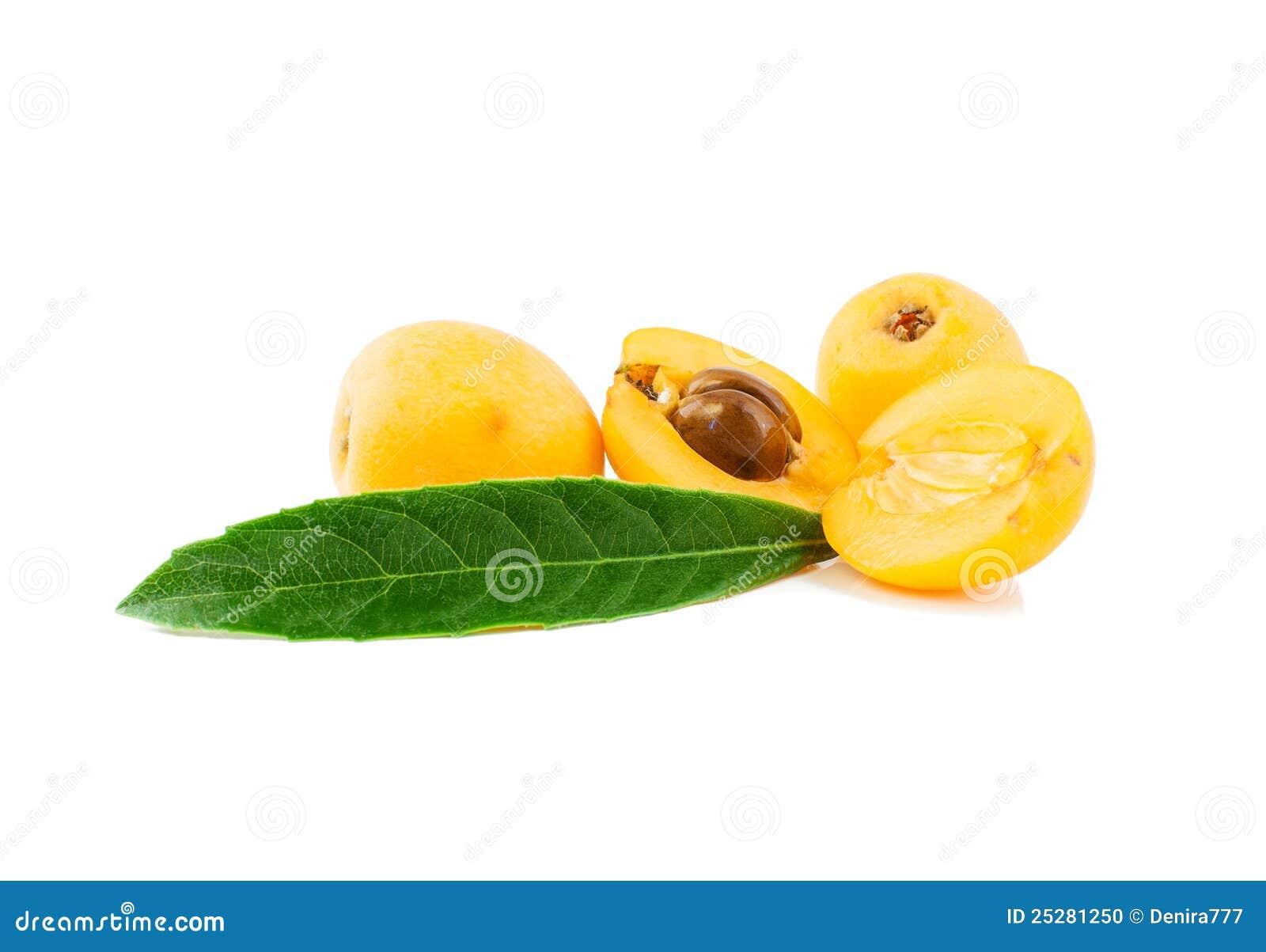 loquat fruit is squash a fruit