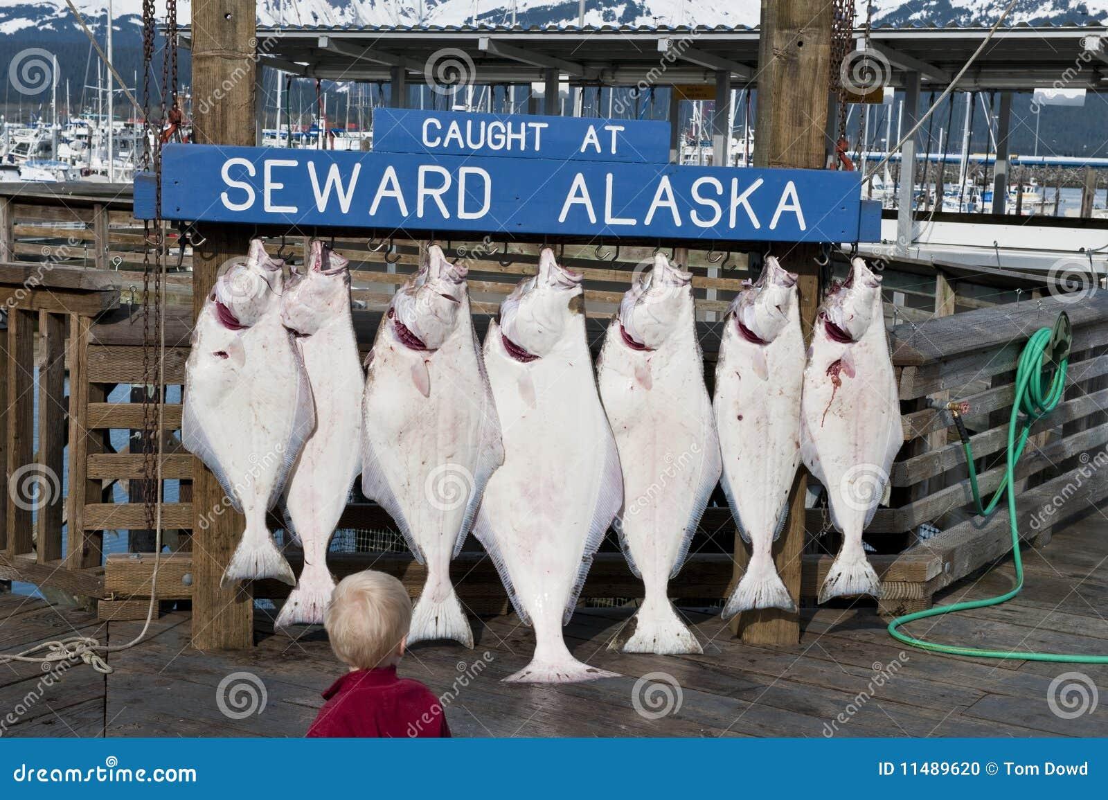 Loquet des poissons frais