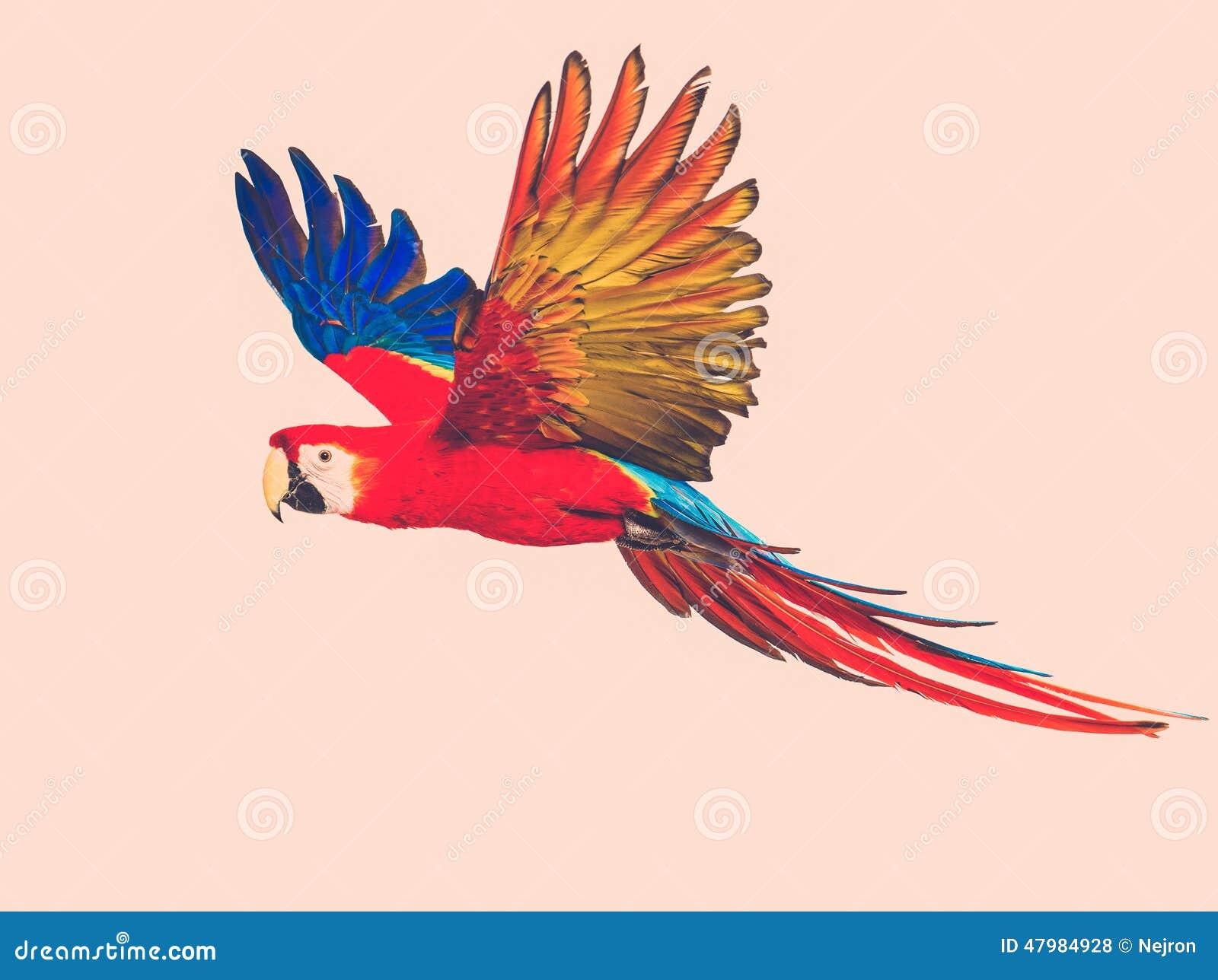 Loro colorido del vuelo