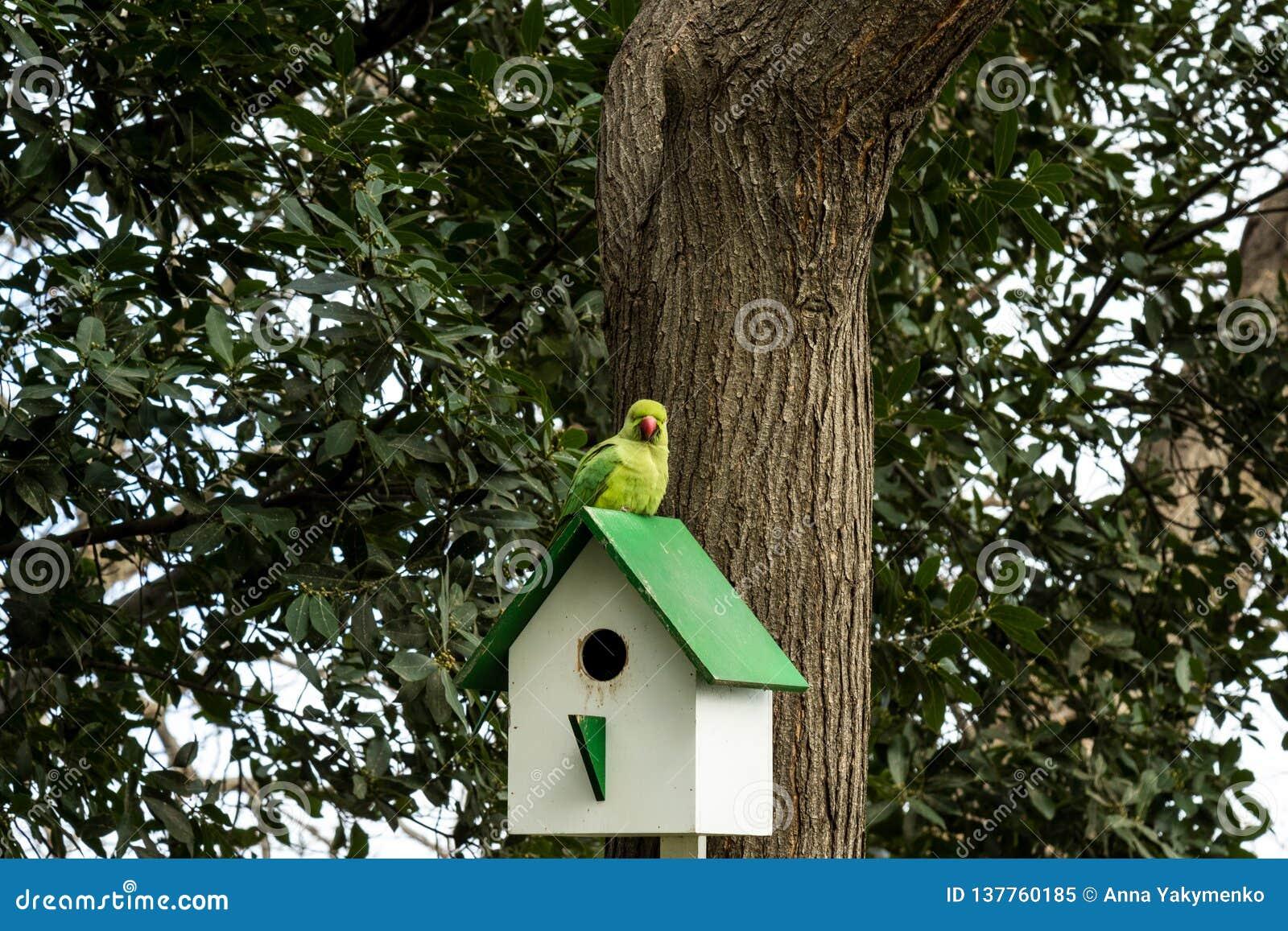 Loro en pajarera de madera en un árbol
