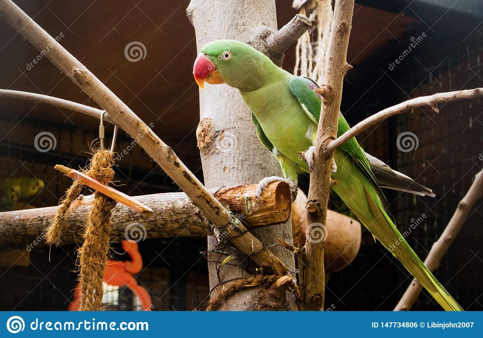 Loro verde que se sienta en árbol