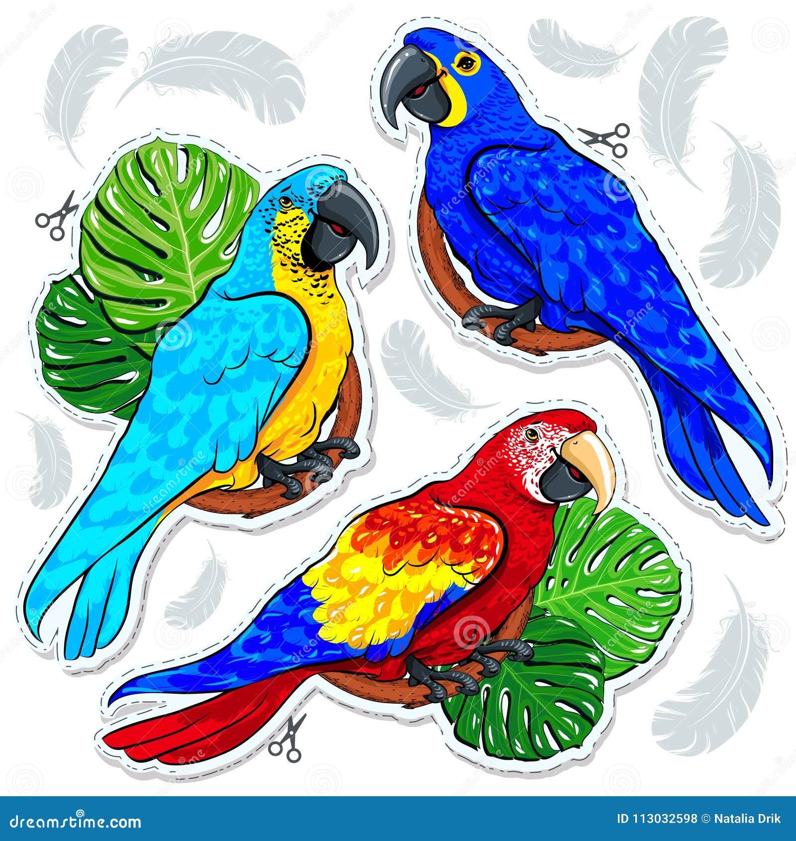 Loros, hojas de palma y plumas coloreados brillantes de Stiker