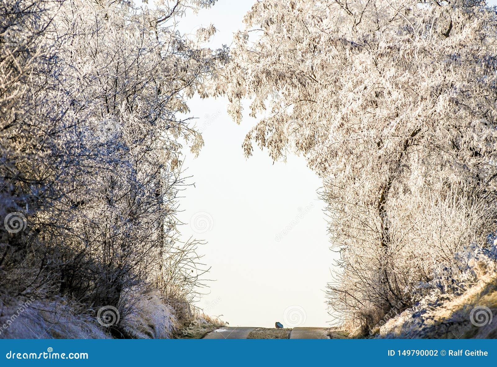 Los árboles congelados representan una puerta sobre el camino