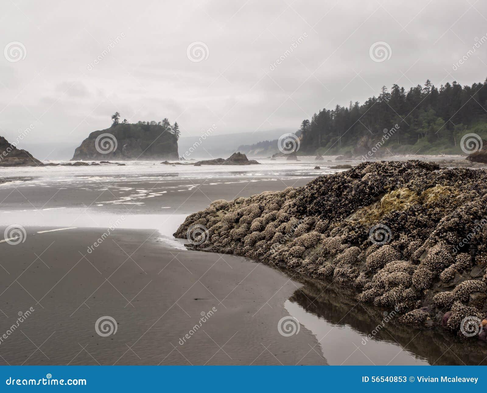 Los árboles crecen en pilas del mar en la playa arenosa