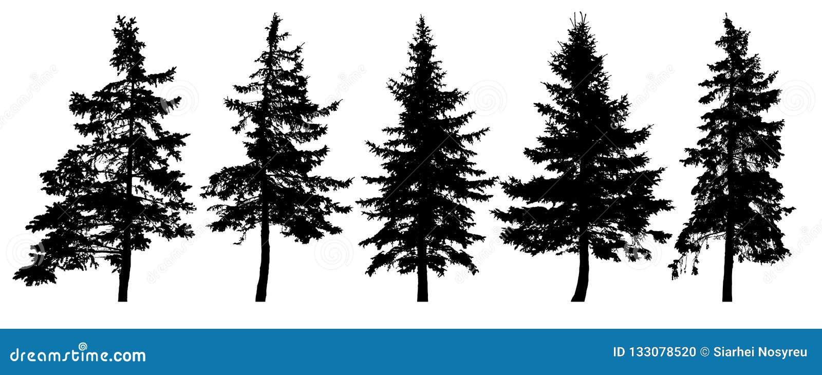 Los árboles forestales siluetean Sistema aislado del vector