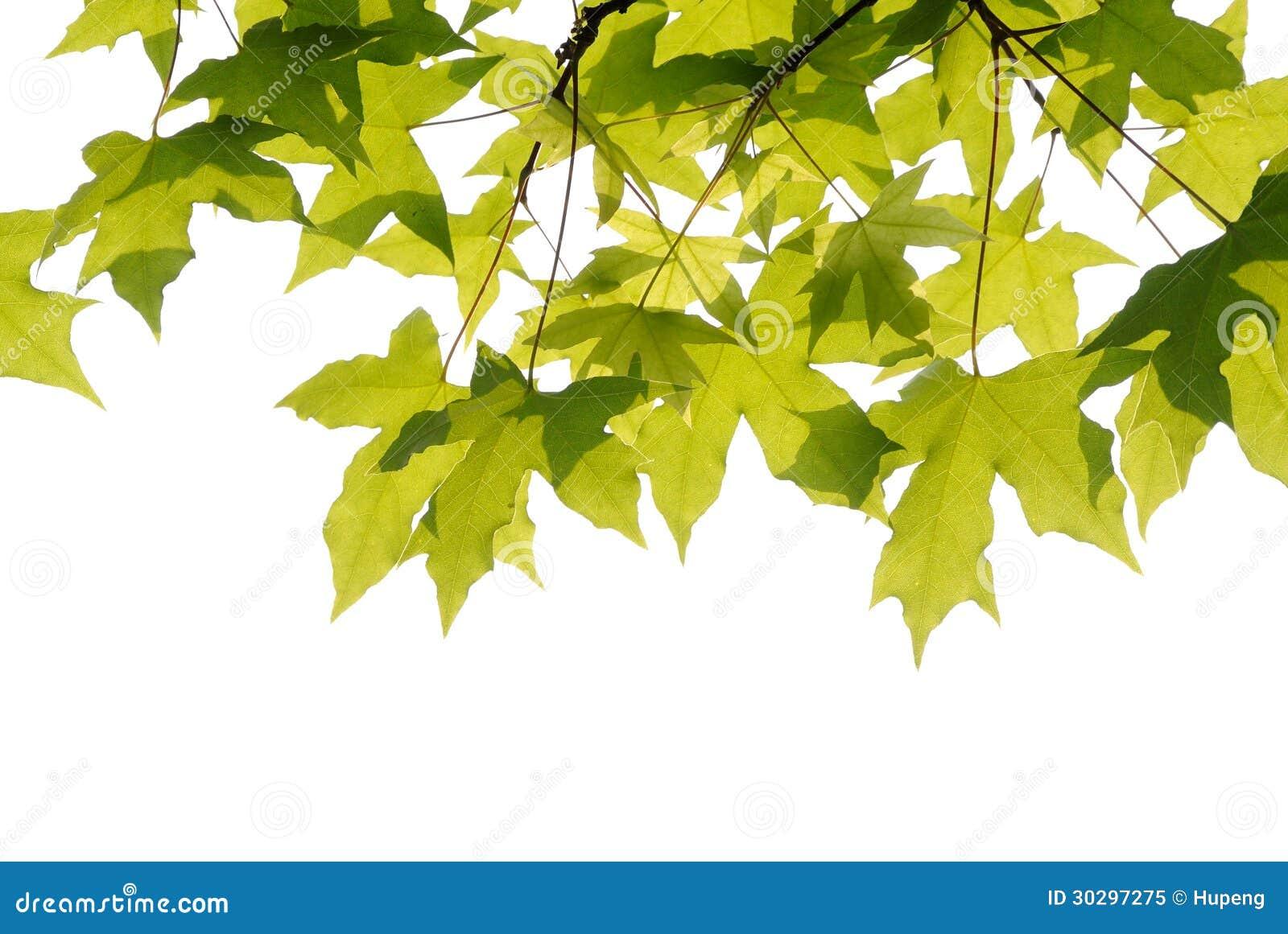Hojas de los árboles planos