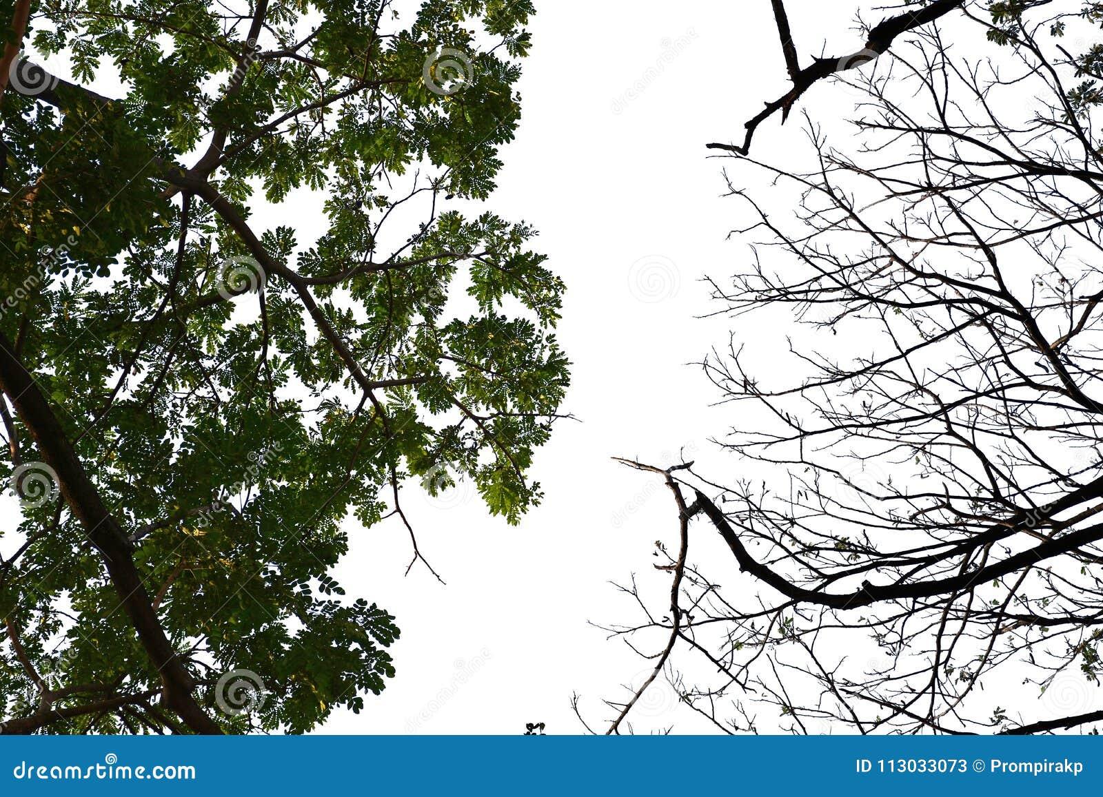 Los árboles son diversas hojas de la vertiente de la causa