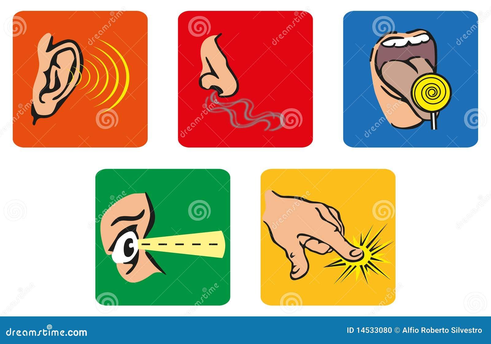 Los 5 sentidos foto de archivo imagen 14533080 for Mural de los 5 sentidos
