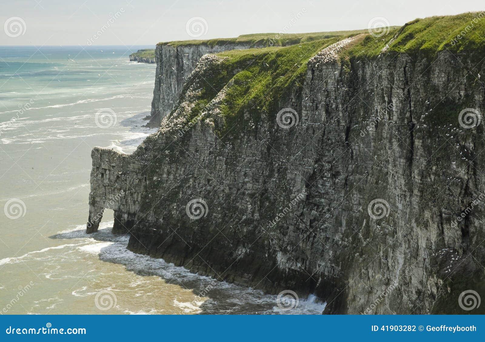 Los acantilados de tiza, en Bempton en Yorkshire, Inglaterra