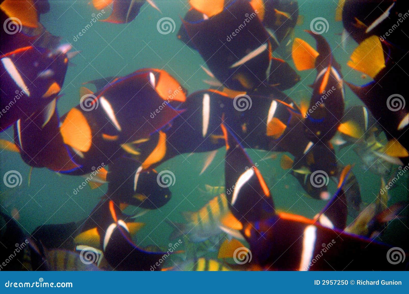 Los Arcos Tropical Fish