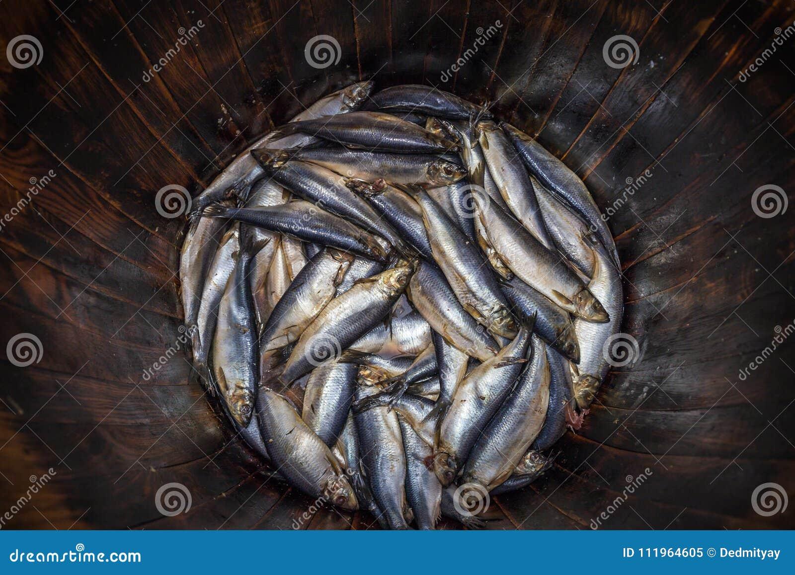 Los arenques frescos salados pescan en el barril de madera del roble, mariscos tradicionales